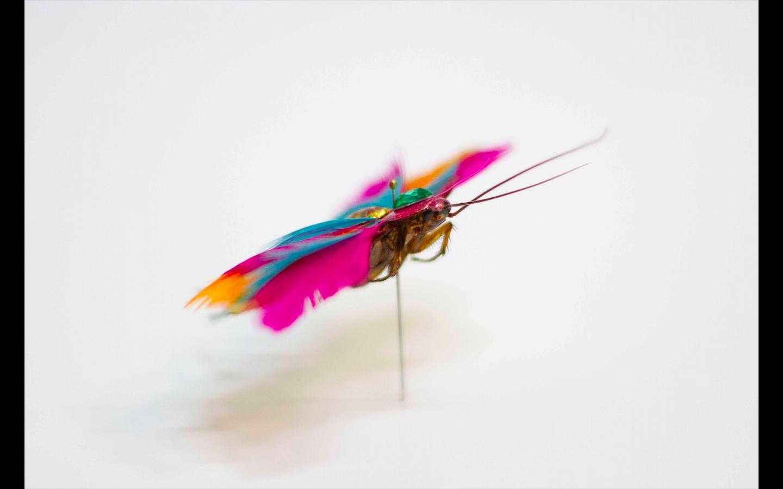 Cucaracha/ Aderak